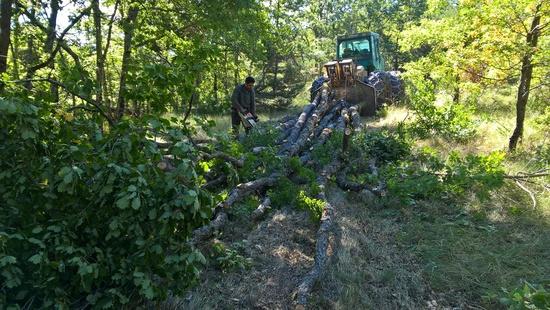 Valorisation du bois local